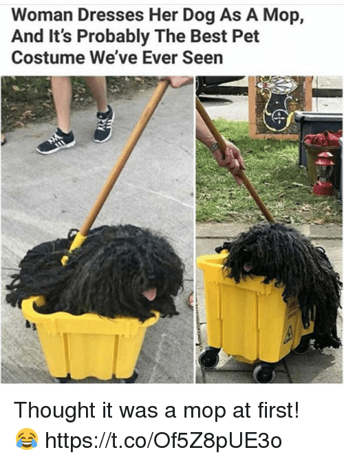 Best, Dresses, and Thought: Woman Dresses Her Dog As A Mop,  And It's Probably The Best Pet  Costume We've Ever Seen Thought it was a mop at first! 😂 https://t.co/Of5Z8pUE3o