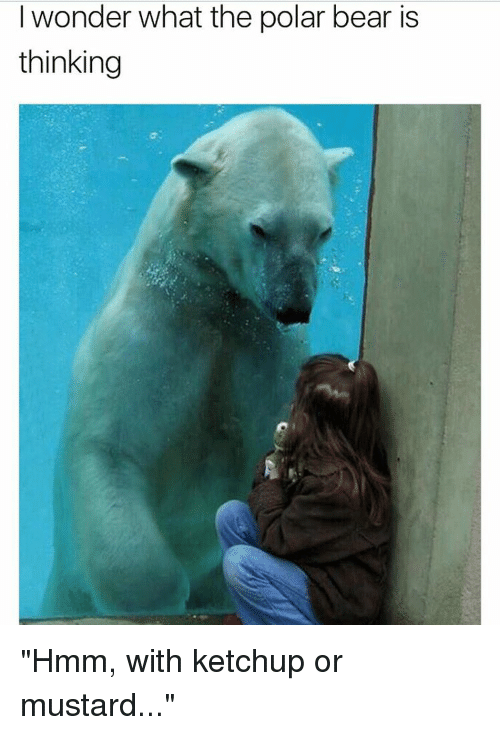 Wonder What The Polar Bear Is Thinking Hmm With Ketchup Or Mustard