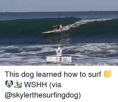 Memes, Wshh, and How To: WOPLD STAR  HIP HOP.COM This dog learned how to surf 👏🐶🏄 WSHH (via @skylerthesurfingdog)