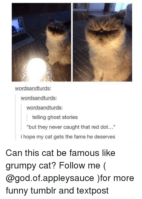 """Funny, God, and Memes: wordsandturds:  wordsandturds:  wordsandturds:  telling ghost stories  but they never caught that red dot...""""  i hope my cat gets the fame he deserves Can this cat be famous like grumpy cat? Follow me ( @god.of.appleysauce )for more funny tumblr and textpost"""