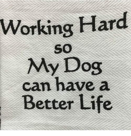 working hard my dog can have a better life 21620323 working hard my dog can have a better life life meme on me me