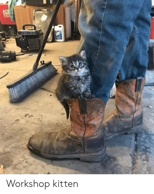 Kitten and Workshop: Workshop kitten
