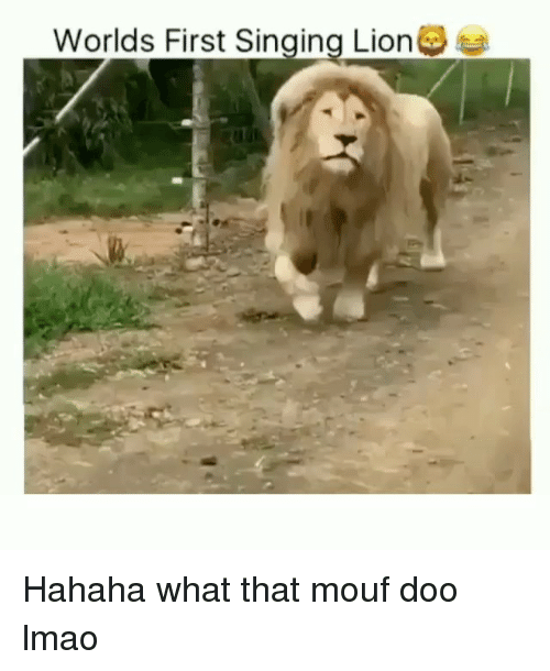 Funny, Lmao, and Singing: Worlds First Singing Lion Hahaha what that mouf doo lmao