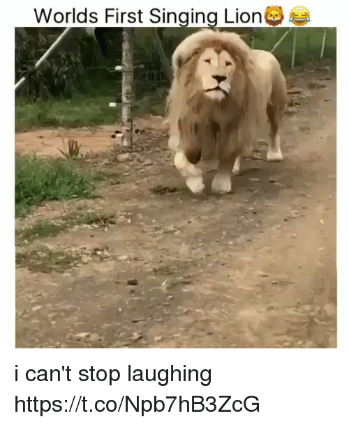 Singing, Lion, and Girl Memes: Worlds First Singing Lion i can't stop laughing https://t.co/Npb7hB3ZcG