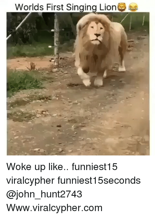 Funny, Singing, and Lion: Worlds First Singing Lion Woke up like.. funniest15 viralcypher funniest15seconds @john_hunt2743 Www.viralcypher.com