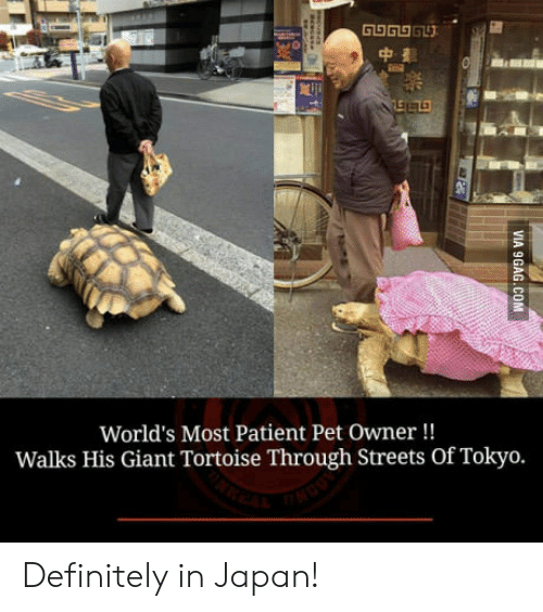 Definitely, Streets, and Giant: World's Most Patient Pet Owner!!  Walks His Giant Tortoise Through Streets Of Tokyo. Definitely in Japan!