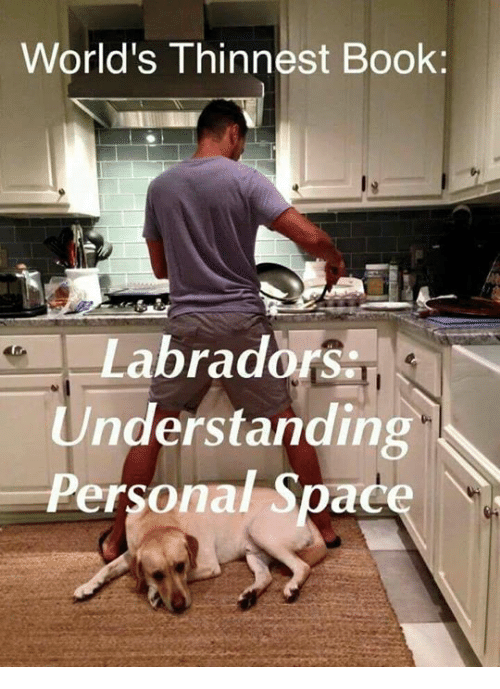 Memes, Book, and Space: World's Thinnest Book  abradors  Understanding  Personal Space