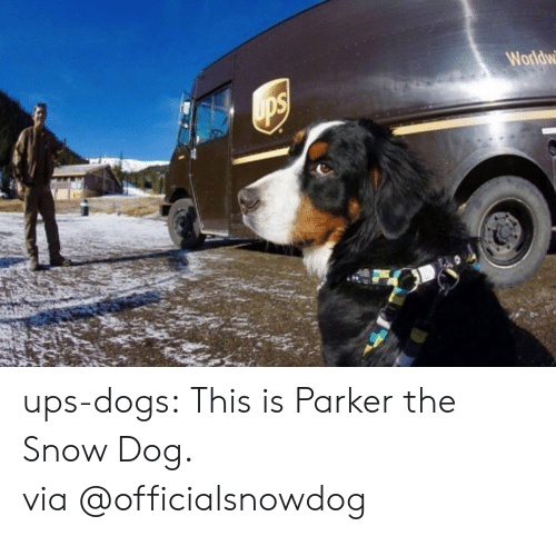 Dogs, Instagram, and Target: Worldw ups-dogs: This is Parker the Snow Dog. via@officialsnowdog