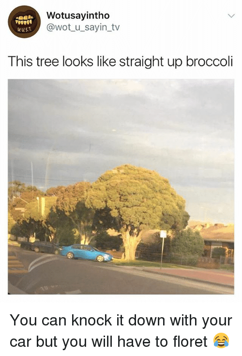 Tree, Girl Memes, and Wot: Wotusayintho  @wot_u_sayin_tv  This tree looks like straight up broccoli You can knock it down with your car but you will have to floret 😂