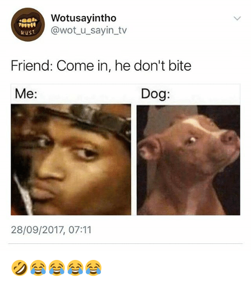 wotusayintho wot u sayin tv wus friend come in he dont bite me 27984131 wotusayintho wus friend come in he don't bite me dog 28092017 0711