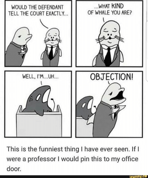 Funny, Memes, and Office: WOULD THE DEFENDANT  TELL THE COURT EXACTLY.  WHAT KIND  OF WHALE YOU ARE?  WELL, I'M...UH...  OBJECTION!  This is the funniest thing I have ever seen. If I  were a professor I would pin this to my office  door.  funny