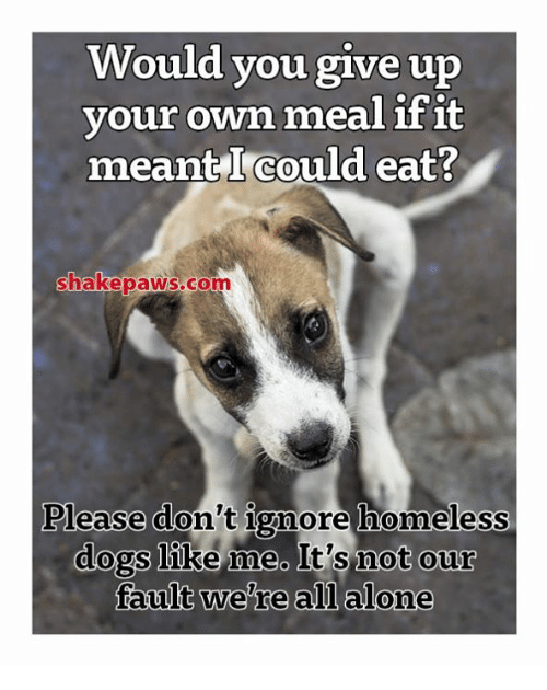 Would You Give Up Our Own Meal Ifit Meant I Could Eat