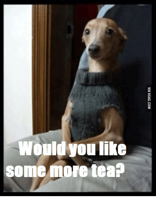 Dog Sitting in Chair: Would you like  some more tea