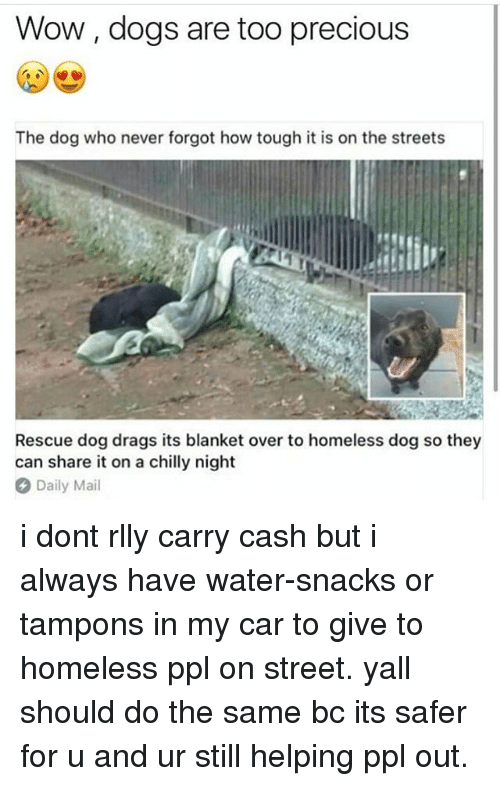 Dogs, Homeless, and Memes: Wow, dogs are too precious  The dog who never forgot how tough it is on the streets  i1  Rescue dog drags its blanket over to homeless dog so they  can share it on a chilly night  Daily Mail i dont rlly carry cash but i always have water-snacks or tampons in my car to give to homeless ppl on street. yall should do the same bc its safer for u and ur still helping ppl out.