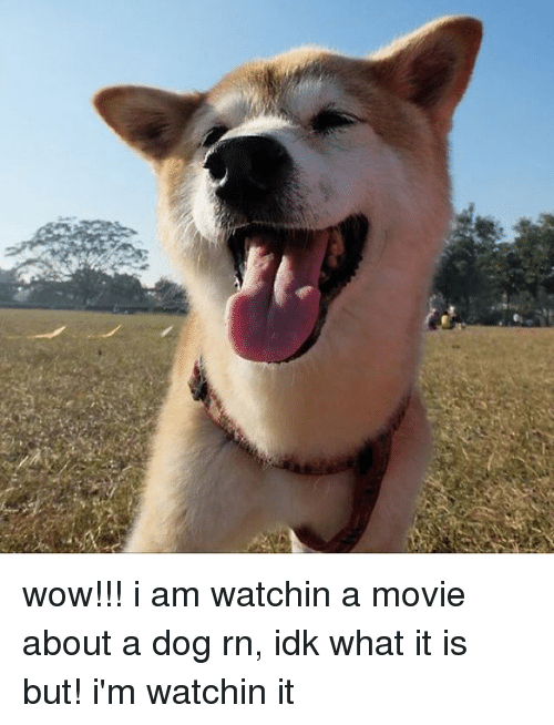 wow i am watchin a movie about a dog rn idk what it is but i m