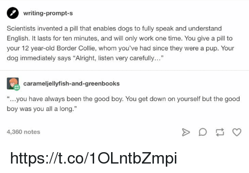 "Dogs, Memes, and Work: writing-prompt-s  Scientists invented a pill that enables dogs to fully speak and understand  English. It lasts for ten minutes, and will only work one time. You give a pil to  your 12 year-old Border Collie, whom you've had since they were a pup. Your  dog immediately says ""Alright, listen very carefully...""  carameljellyfish-and-greenbooks  "" you have always been the good boy. You get down on yourself but the good  boy was you all a long.""  4,360 notes https://t.co/1OLntbZmpi"