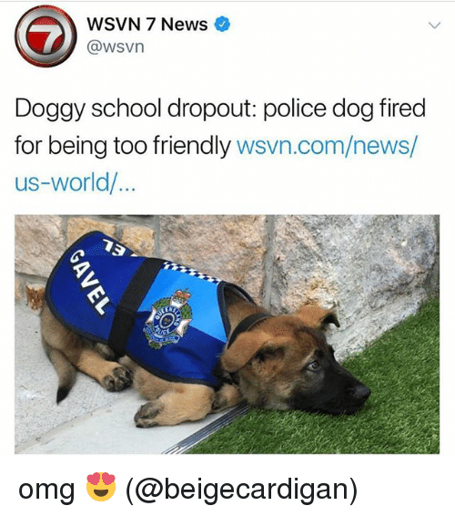 Memes, News, and Omg: WSVN 7 News  @wsvn  Doggy school dropout: police dog fired  for being too friendly wsvn.com/news/  us-world/ omg 😍 (@beigecardigan)