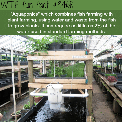 WTF Fun Fact #1468 Aquaponics Which Combines Fish Farming With Plant