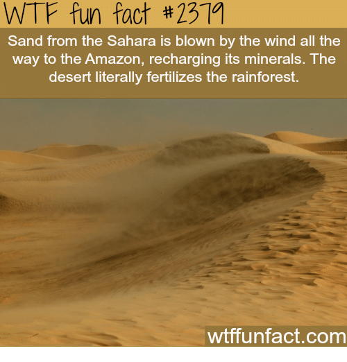 Amazon, Wtf, and All The: WTF fun fact #231a  Sand from the Sahara is blown by the wind all the  way to the Amazon, recharging its minerals. The  desert literally fertilizes the rainforest.  wtffunfact.com