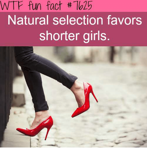 Natural Selection Favors Shorter Girls