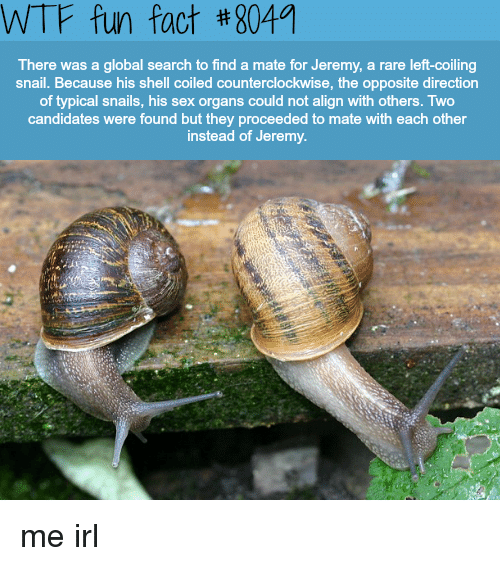 Sex, Wtf, and Search: WTF fun fact #8049  There was a global search to find a mate for Jeremy, a rare left-coiling  snail. Because his shell coiled counterclockwise, the opposite direction  of typical snails, his sex organs could not align with others. Two  candidates were found but they proceeded to mate with each other  instead of Jeremy. me irl