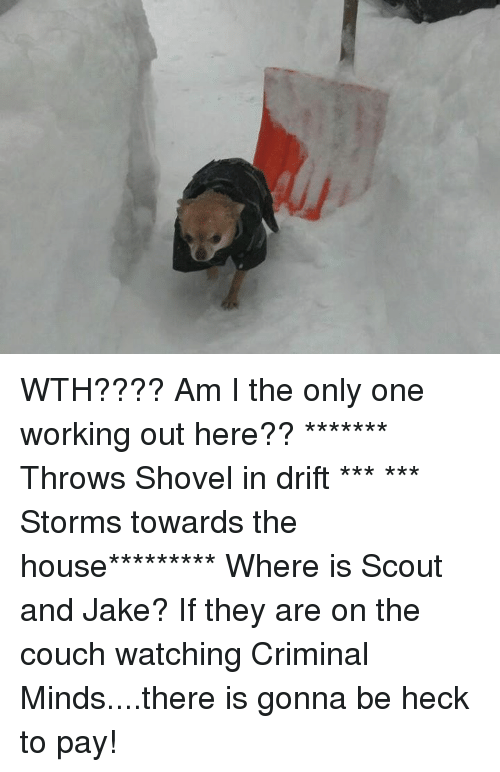 Memes, Criminal Minds, and Am I the Only One: WTH????  Am I the only one working out here??   ******* Throws Shovel in drift *** *** Storms towards the house*********  Where is Scout and Jake? If they are on the couch watching Criminal Minds....there is gonna be heck to pay!