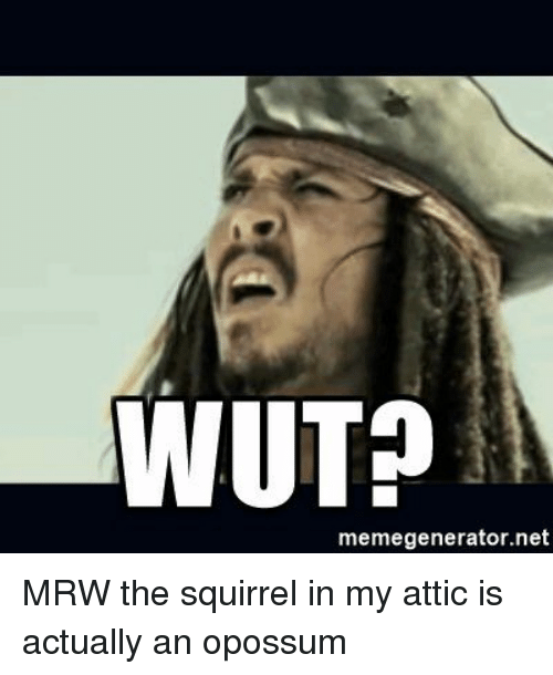 Mrw, Squirrel, and Advice Animals: WUT?  memegenerator.net MRW the squirrel in my attic is actually an opossum