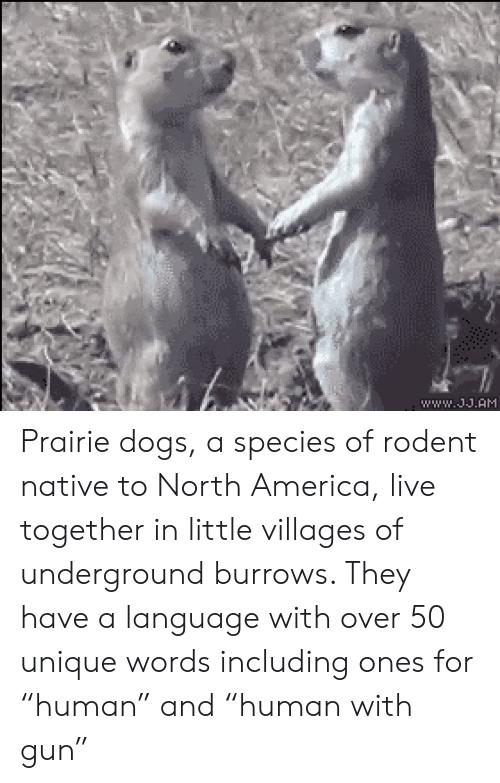 """America, Dogs, and Live: ww.11.AH Prairie dogs, a species of rodent native to North America, live together in little villages of underground burrows. They have a language with over 50 unique words including ones for """"human"""" and """"human with gun"""""""