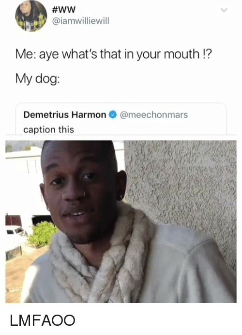 Girl Memes, Dog, and Whats:  #WW  @iamwilliewill  Me: ave what's that in your mouth!?  My dog  Demetrius Harmon@meechonmars  caption this LMFAOO