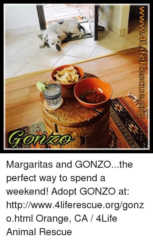 Memes Animal And Wwn Margaritas And Gonzo The Perfect
