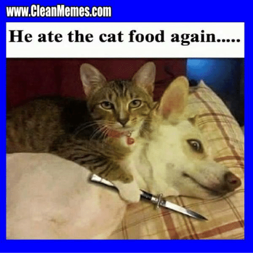 wwwcleanmemescom he ate the cat food again meme on me me