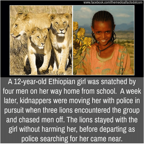 Facebook, Memes, and Police: www.facebook.com/themedicalfactsdotcom  A 12-year-old Ethiopian girl was snatched by  four men on her way home from school. A week  later, kidnappers were moving her with police in  pursuit when three lions encountered the group  and chased men off. The lions stayed with the  girl without harming her, before departing as  police searching for her came near