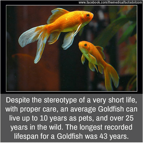 Goldfish, Memes, and 25 Years: www.facebook.com/themedicalfactsdotcom  Despite the stereotype of a very short life,  with proper care, an average Goldfish can  live up to 10 years as pets, and over 25  years in the wild. The longest recorded  lifespan for a Goldfish was 43 years