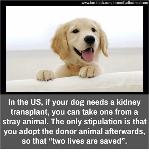 """Memes, Stipulations, and 🤖: www.facebook.com/themedicalfactsdotcom  In the US, if your dog needs a kidney  transplant, you can take one from a  stray animal. The only stipulation is that  you adopt the donor animal afterwards,  so that """"two lives are saved""""."""