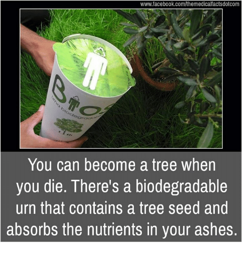Facebook, Memes, and facebook.com: www.facebook.com/themedicalfactsdotcom  You can become a tree when  you die. There's a biodegradable  urn that contains a tree seed and  absorbs the nutrients in your ashes.