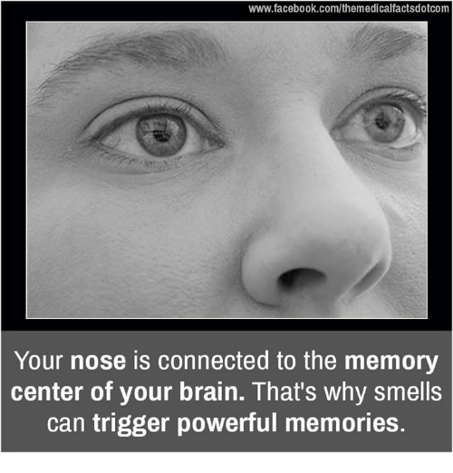 Facebook, Memes, and Brain: www.facebook.com/themedicalfactsdotcom  Your nose is connected to the memory  center of your brain. That's why smells  can trigger powerful memories.
