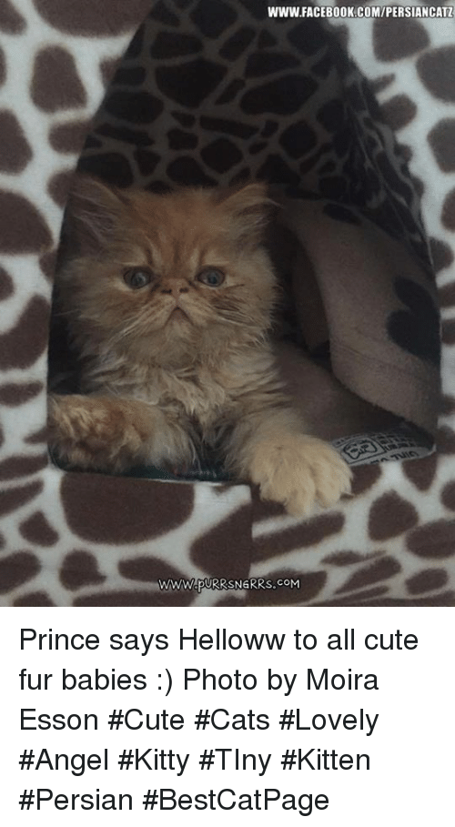 Www Facebook Comipersiancatz Prince Says Helloww To All Cute Fur
