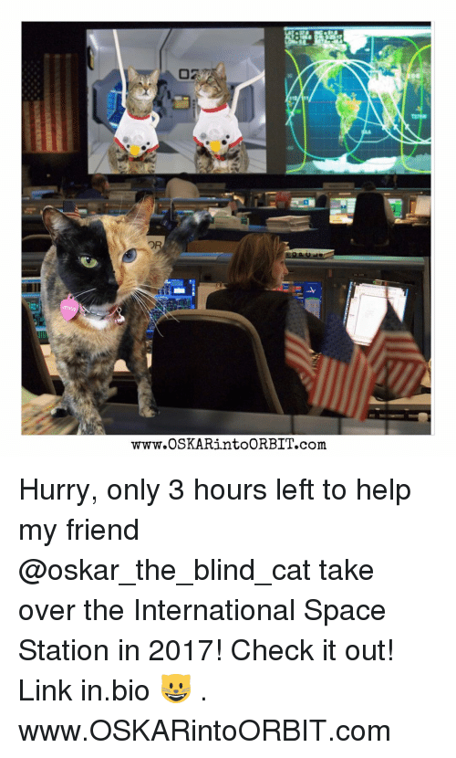 Memes, Space, and 🤖: www.OSKARintoORBIT.com Hurry, only 3 hours left to help my friend @oskar_the_blind_cat take over the International Space Station in 2017! Check it out! Link in.bio 😺 . www.OSKARintoORBIT.com