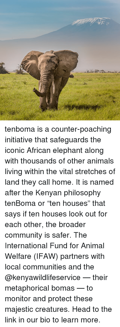 "Animals, Community, and Head: WX tenboma is a counter-poaching initiative that safeguards the iconic African elephant along with thousands of other animals living within the vital stretches of land they call home. It is named after the Kenyan philosophy tenBoma or ""ten houses"" that says if ten houses look out for each other, the broader community is safer. The International Fund for Animal Welfare (IFAW) partners with local communities and the @kenyawildlifeservice — their metaphorical bomas — to monitor and protect these majestic creatures. Head to the link in our bio to learn more."
