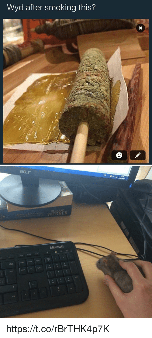 Funny, Microsoft, and Smoking: Wyd after smoking this?  A   WERNER  Microsoft https://t.co/rBrTHK4p7K