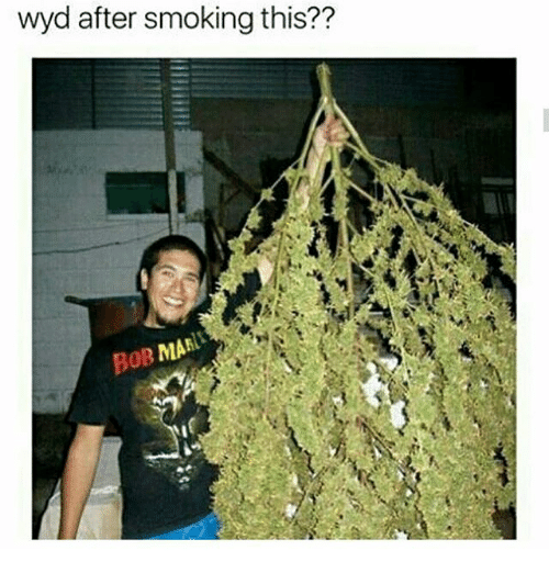 Memes, Smoking, and Wyd: wyd after smoking this??  MAN  poB