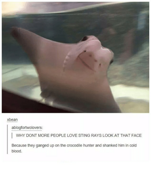 Love, Sting, and Cold: xbean  ablogfortwolovers:  I WHY DONT MORE PEOPLE LOVE STING RAYS LOOK AT THAT FACE  Because they ganged up on the crocodile hunter and shanked him in cold  blood