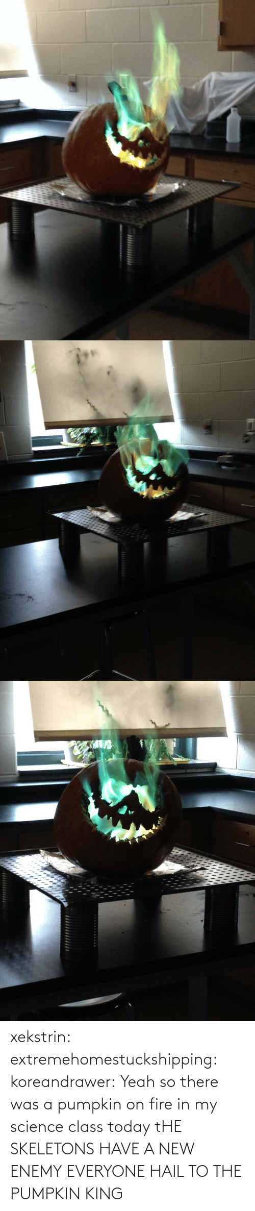 Fire, Tumblr, and Yeah: xekstrin: extremehomestuckshipping:  koreandrawer:  Yeah so there was a pumpkin on fire in my science class today  tHE SKELETONS HAVE A NEW ENEMY  EVERYONE HAIL TO THE PUMPKIN KING