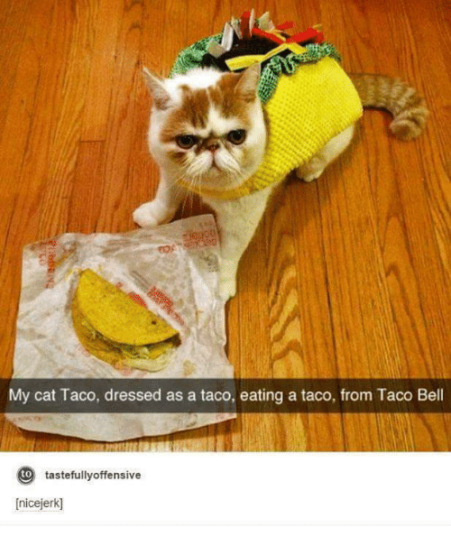 Y Cat Taco Dressed as a Taco Eating a Taco From Taco Bell to