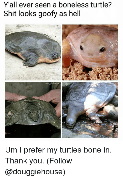 Memes, Shit, and Thank You: Y'all ever seen a boneless turtle?  Shit looks goofy as hell  douggiehouse Um I prefer my turtles bone in. Thank you. (Follow @douggiehouse)