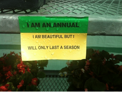 Beautiful, Will, and Season: YAM AN ANNUAL  I AM BEAUTIFUL BUT1  WILL ONLY LAST A SEASON