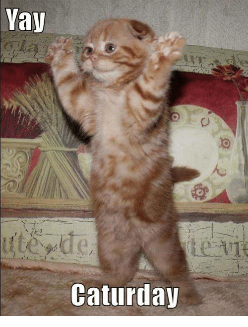 Yay Caturday Caturday Meme On Me Me See more ideas about cat memes, crazy cats, funny cats. yay caturday caturday meme on me me