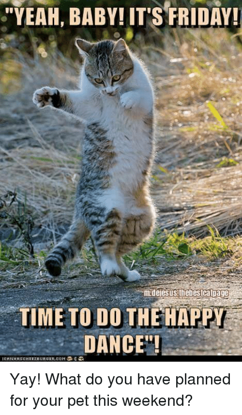 Yeah Baby Its Friday Time To Do The Happy Dance Yay What Do You Have Planned For Your Pet This Weekend Dancing Meme On Me Me Not the best, but not good too :c). happy dance yay what