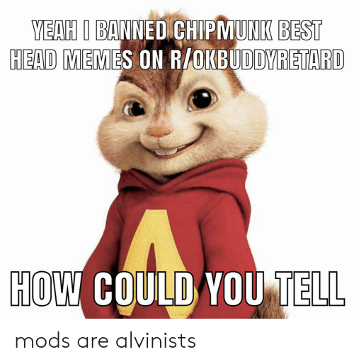 Yeah I Banned Chipmunk Best Head Memes On Rokbuddyretard How Could You Tell Mods Are Alvinists Head Meme On Me Me