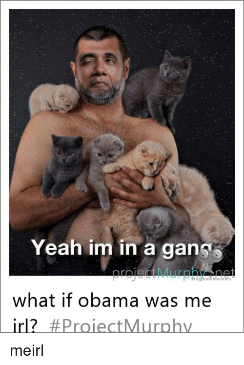 Obama, Yeah, and Irl: Yeah im in a gans  Web now Me mass  what if obama was me  irl? Proiect Murphy meirl